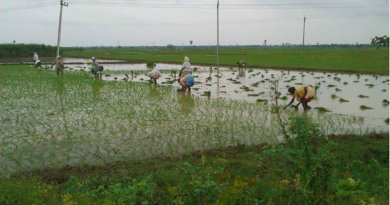 world-food-india-planting-rice-2012-photo-aaron-sanderson