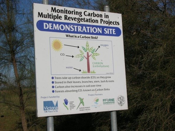 sign-carbon-sink-in-reafforestation-610