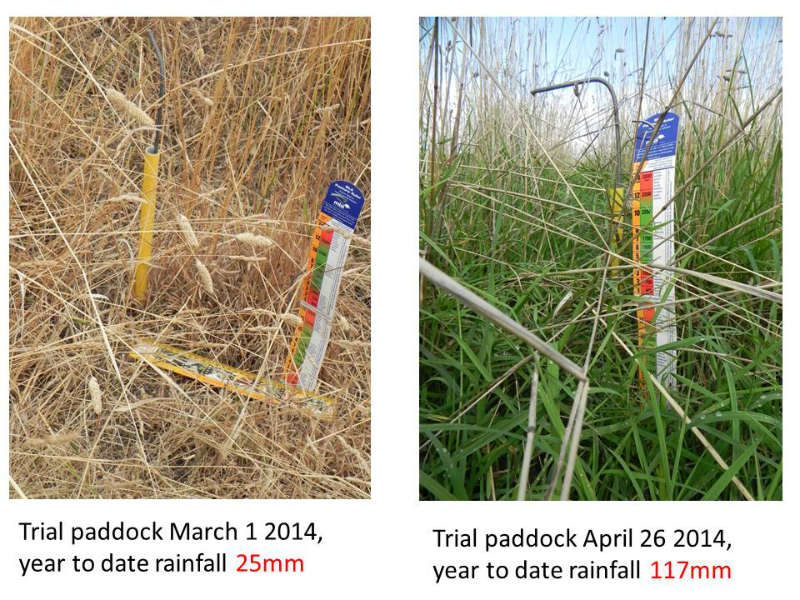 pasture-ruler-photo-point-1-march-14-and-26-april-14