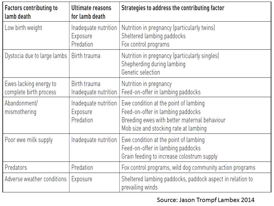 lamb-survival-table-factors-contributing-to-lamb-death-trompf-lambex-2014_0