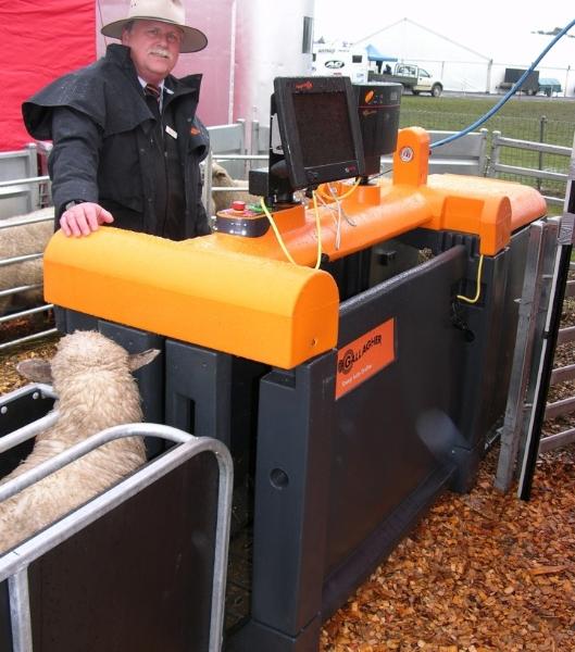 sv10-web-sheep-auto-drafter-jeff-chadwick-810