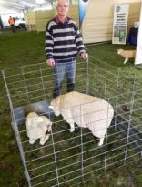 Sheepvention 2008