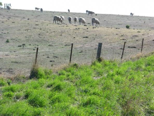 pasture-fenceline-glenthompson-30-mm-207-small