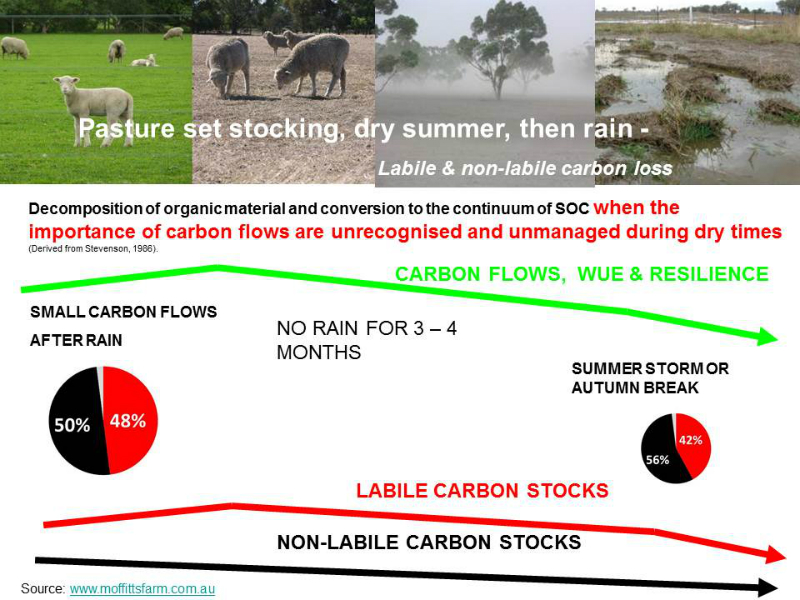 carbon-flows-verusus-stocks-sheep-set-stocking