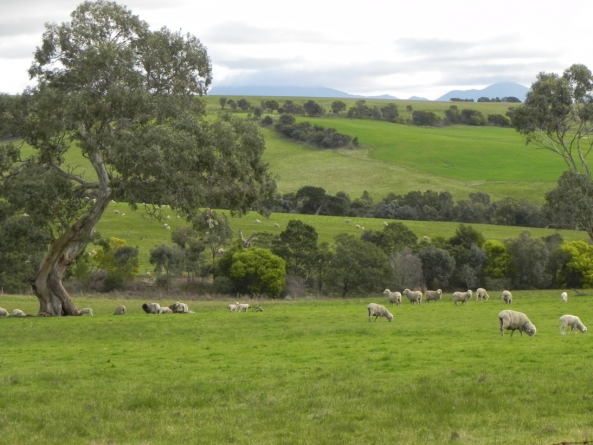 landcare-farming-in-action-glenthompson-814