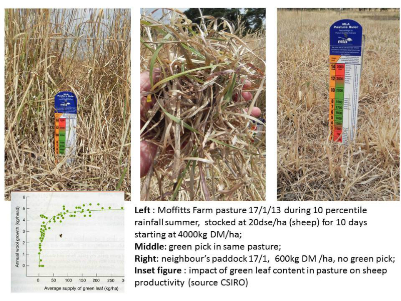 moffitts-farm-pasture-green-pick-17-jan-2013