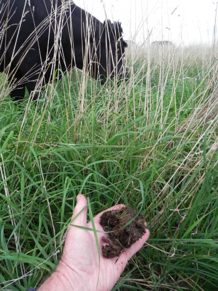 monitoring-pasture-soil-livestock-moffitts-312-small