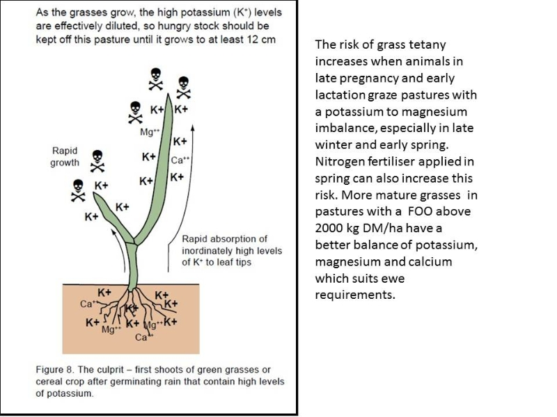 pasture-growth-metabolic-diseases