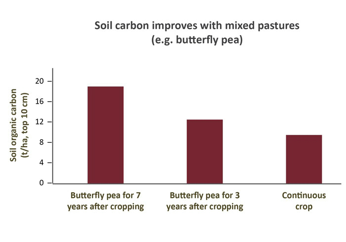 soil-carbon-improves-with-mixed-pastures-source-qld-dpi-futurebeef