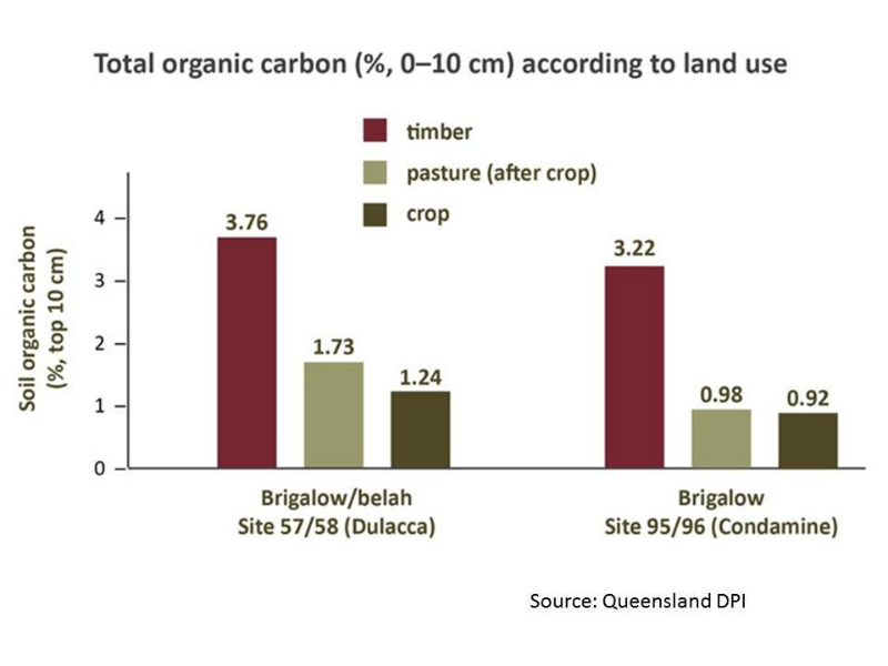 soil-carbon-improves-with-mixed-pastures-source-qld-dpi-futurebeef_0