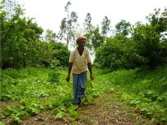 india-farmer-wadi-agroforesty-pic-by-james-brockington_0