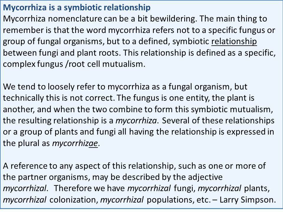 mycorrhiza thesis 1312 help with veterinary personal statement dissertation mycorrhiza scientific editing service can i pay someone to write my research paper.