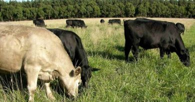 Holistic grazing is practised on Moffitts Farm