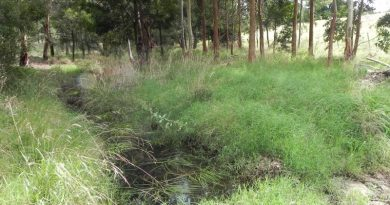 creek with grasses and trees on the creek banks