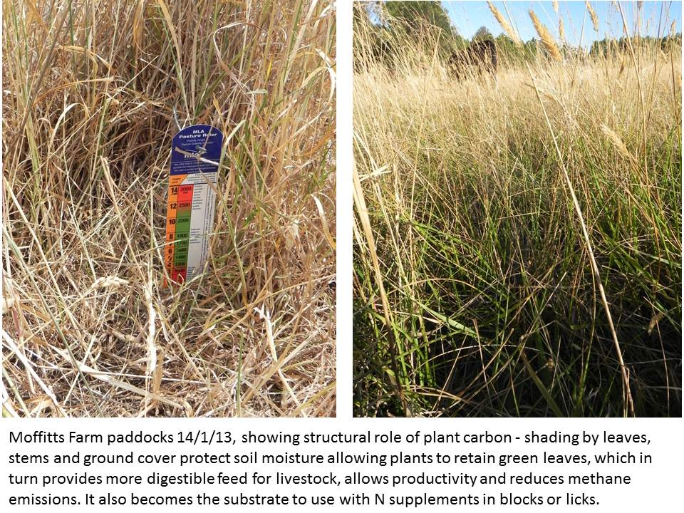 Moffitts farm pasture structural carbon shading 17 Jan 2013