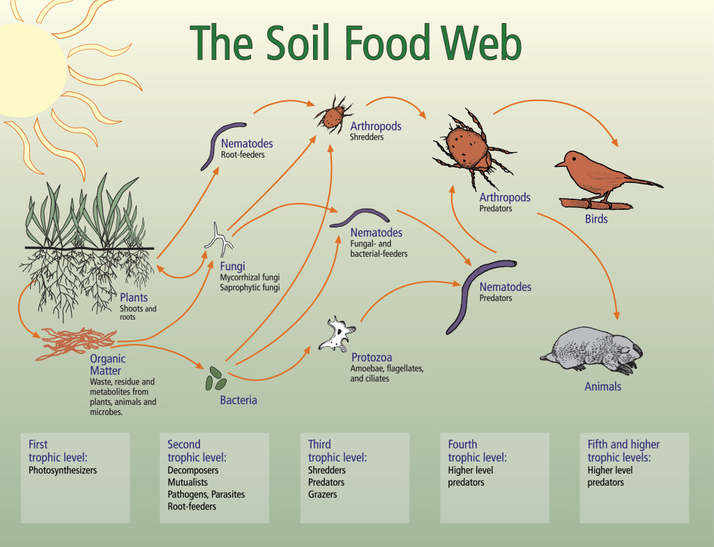 Figure 1: The soil food web. Source USDA NRCS.