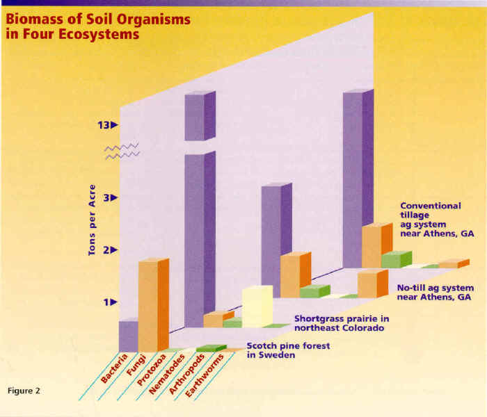 Part 2 Fig 1 Ecosystems impacts on the soil web