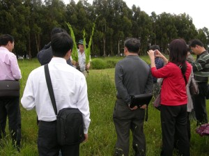 A delegation of Chinese agricultural scientists were keenly interested in the performance of pasture species.