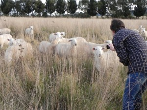 Visitors can see how livestock welfare is closely associated with management of pasture paddocks and conservation corridors