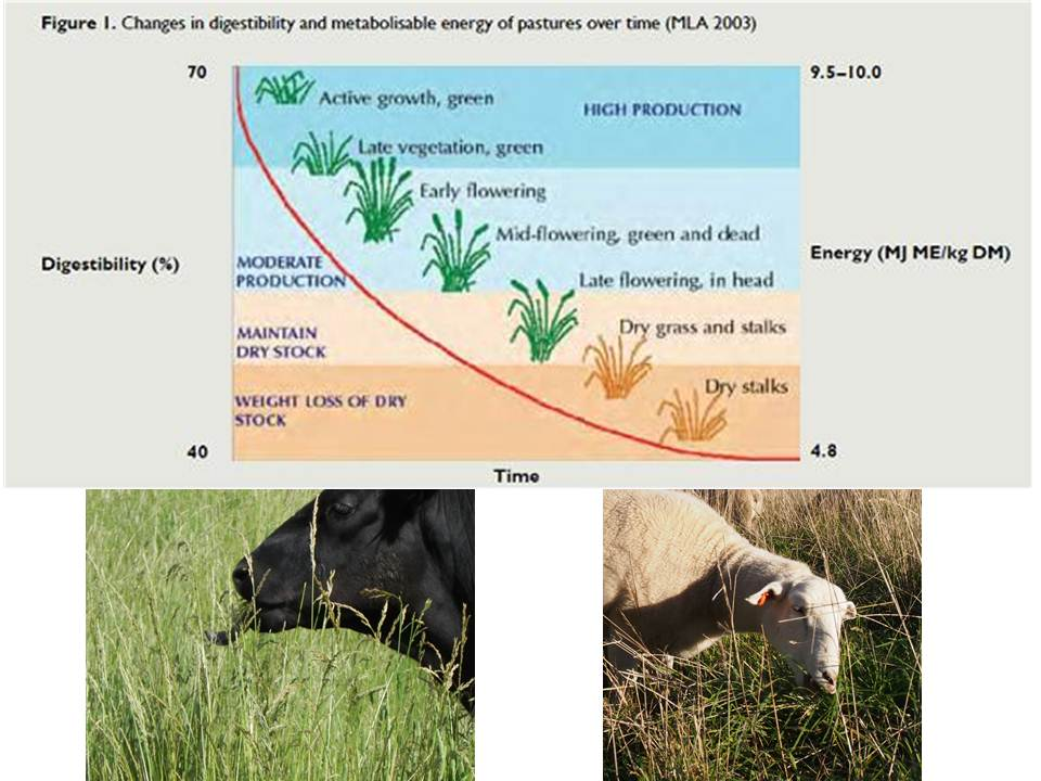 "Figure 1: It is worth taking the time to observe (and record) what the plants on a property are ""telling"" you about the soil, watching what the livestock are eating, monitoring livestock manure consistency and observing animal grazing and resting behaviour."