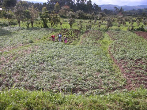 Improving land condition leads to improved rain infiltration, increased water storage in soils, increased water availability, more biomass and greater food security, which in turn reduces pressure on land and the conversion of forest to cropland.