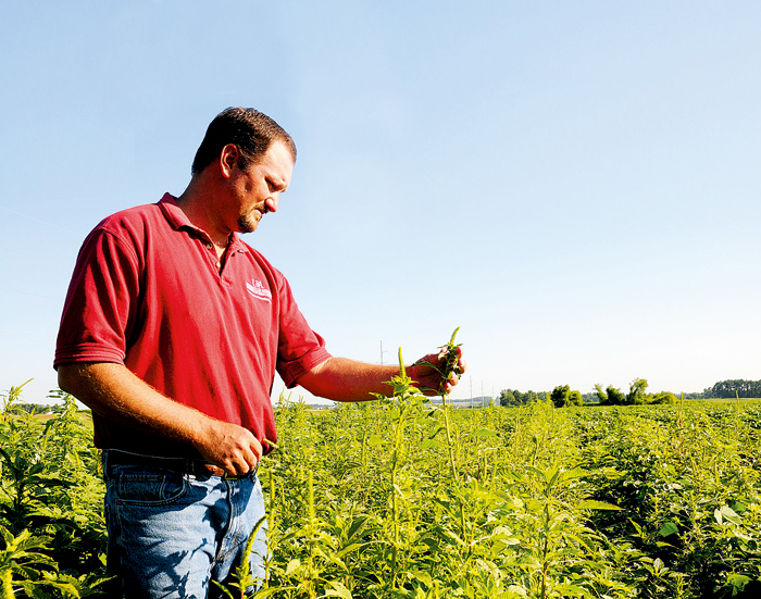 University of Arkansas weed scientist Dr Jason Norsworthy says glyphosate is now lost to the US after widespread overuse of the herbicide in GM cropping systems. Glyphosate-resistant weeds such as the Palmer amaranth are now endemic on 50 per cent of US farming properties. Photo: Fred Miller