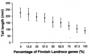 Figure 1: In the New Zealand trial with meat sheep breeds crossed to Finn rams, progeny tail length decreased as Finn % increased. Source: Scobie and O'Connell 2002.