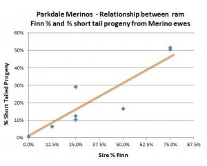 Figure 3: In the Parkdale Merino flock the percentage of short tail lambs increased as percentage of Finn increased in the rams. Source: Parkdale SRS ® Merino Stud.
