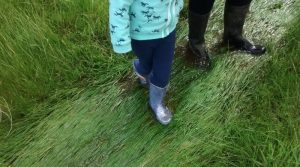 gumboots in clear water that is running off the paddocks after unusually high rainfall