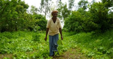 Indian agroforestry farmer
