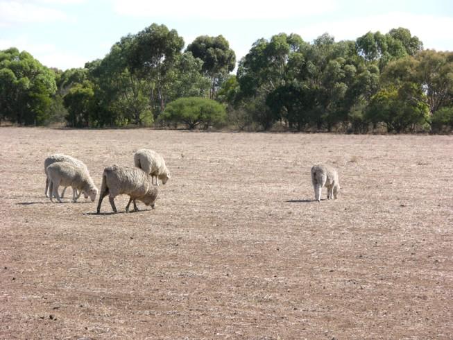 Pasture degraded Skipton B 210
