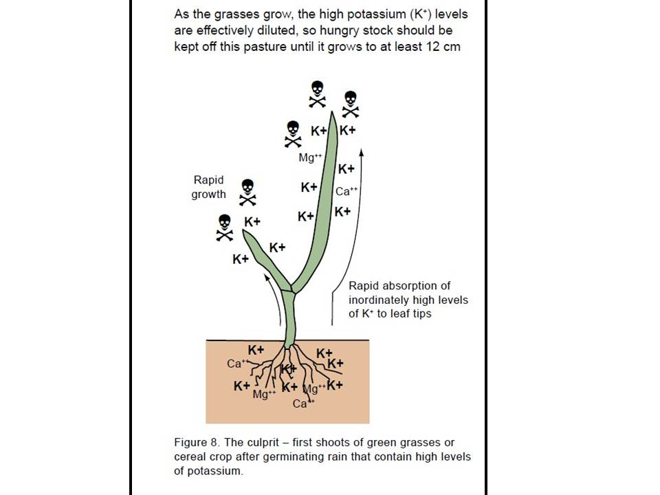 Grass leaves nutrient balance