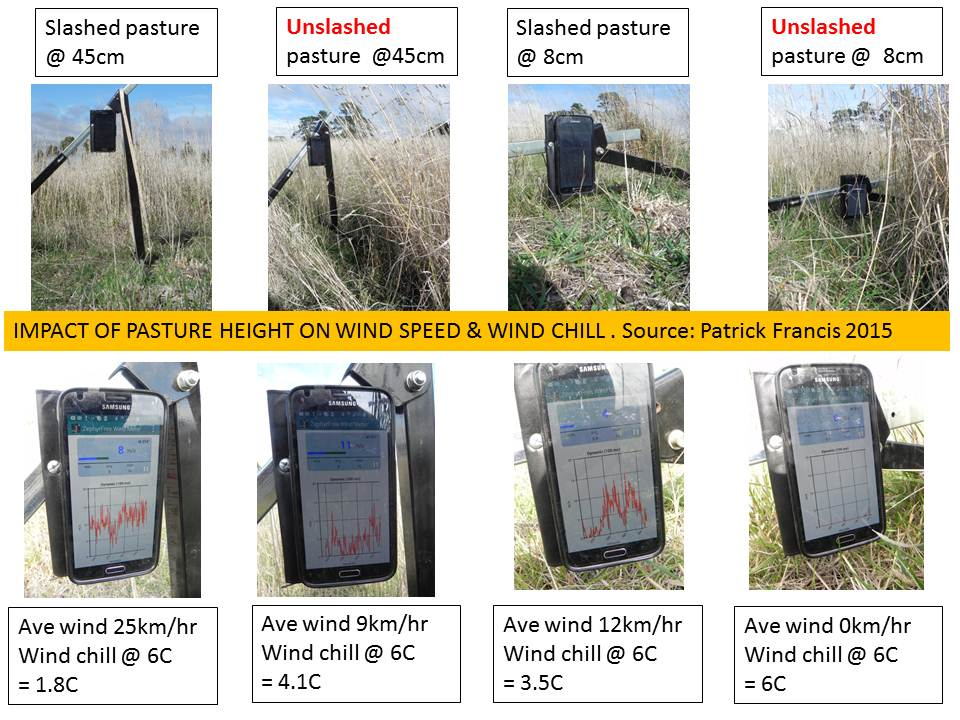 Lamb survival impact of pasture height on wind speed and wind chill May 2015