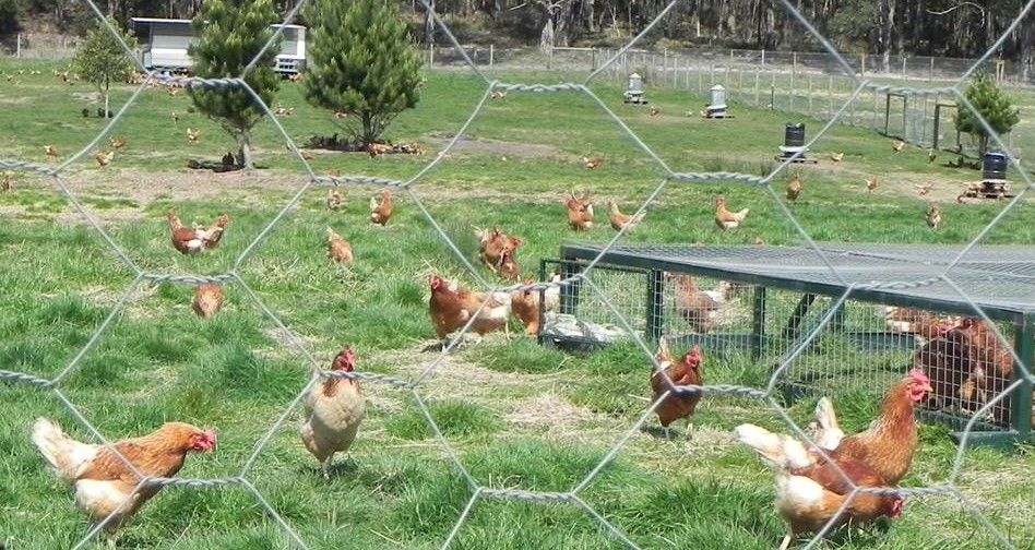 Pasture intensification poultry