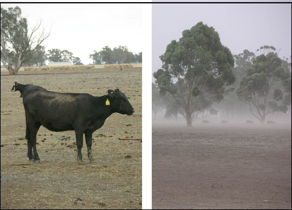 Pasture intensification v extensive degradation