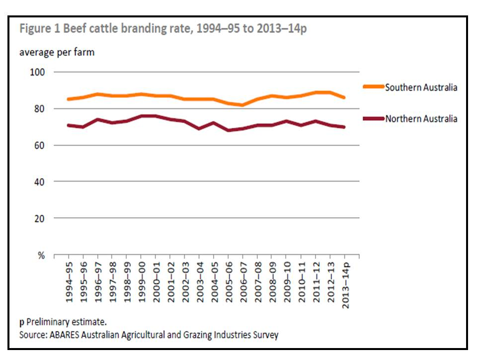 Beef cattle branding rates in Australia 1995 to 2015