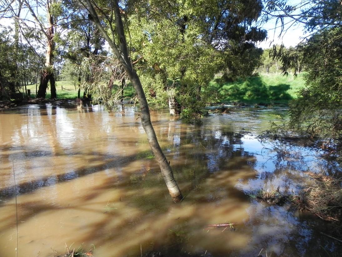 creek-flood-14-sept-b-2016