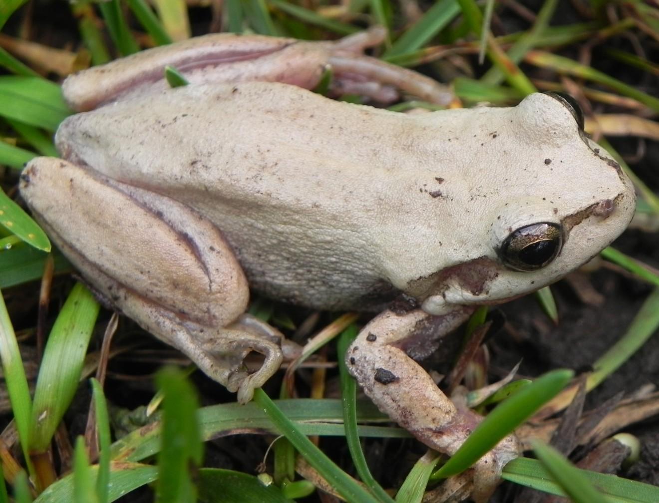frog-white-garden-916
