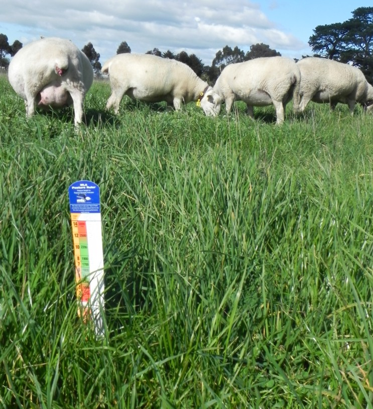 pasture-for-lambing-ewes-c-816