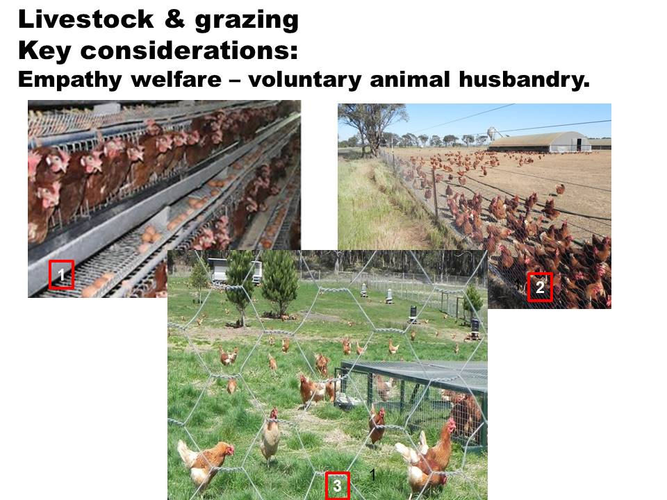 Empathy welfare poultry