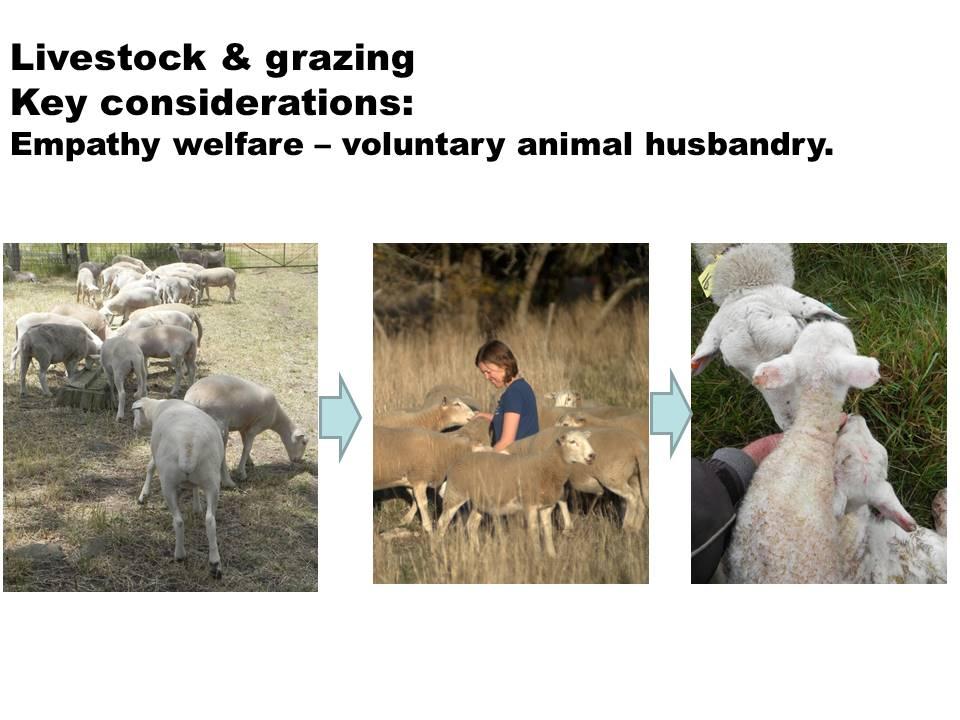 Empathy welfare sheep