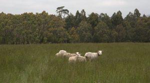 Moffitts Farm wiltipolls