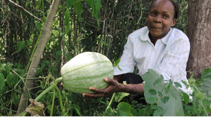 Agroforestry delivers holistic outcomes for Kenyan farmers