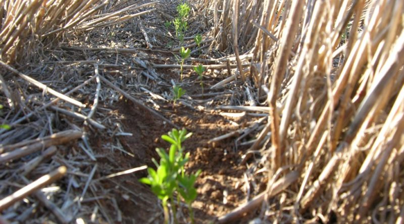 Soil health versus conservation agriculture