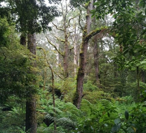 Old-growth forest carbon sinks overestimated